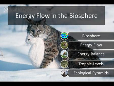 Energy Flow in the Biosphere Energy Flow Energy Balance Trophic Levels Ecological Pyramids Biosphere.