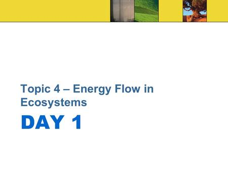 DAY 1 Topic 4 – Energy Flow in Ecosystems. DO NOW 1.Circle the Greek and Latin word parts in each vocabulary term. 2.Use the Greek and Latin meanings.