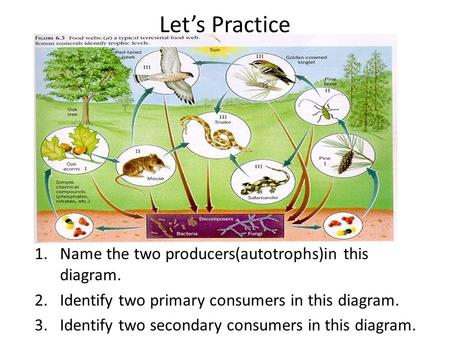 Let's Practice 1.Name the two producers(autotrophs)in this diagram. 2.Identify two primary consumers in this diagram. 3.Identify two secondary consumers.