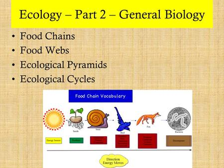 Ecology – Part 2 – General Biology Food Chains Food Webs Ecological Pyramids Ecological Cycles.