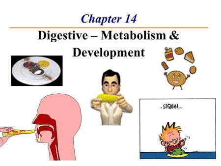 Chapter 14 Digestive – Metabolism & Development. Nutrients – used for growth, maintenance & repair Carbohydrates - Most from plants; Exceptions: lactose.
