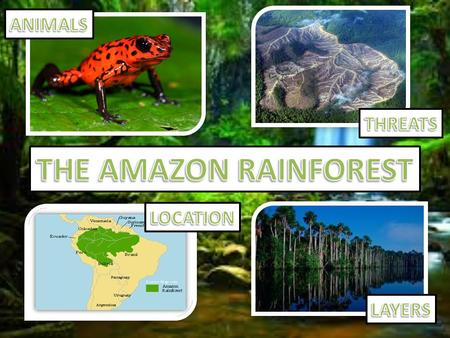 The Amazon has an incredibily rich ecosystem - there are around 40,000 plant species, 1,300 bird species, 3,000 types of fish, 430 mammals and a whopping.