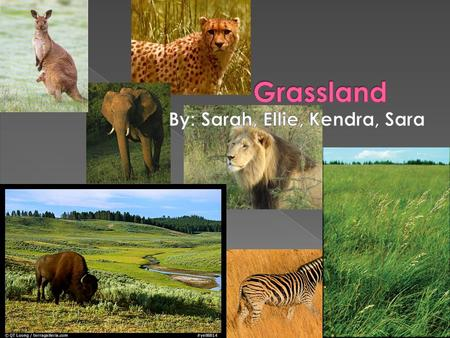  Grassland biomes: large, rolling terrains of grasses, flowers and herbs  Latitude, soil and local climates: determine what kinds of plants grow  Region: