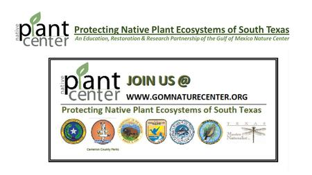 Protecting Native Plant Ecosystems of South Texas An Education, Restoration & Research Partnership of the Gulf of Mexico Nature Center.
