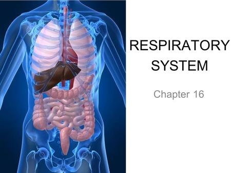 RESPIRATORY SYSTEM Chapter 16. PRIMARY FUNCTIONS ● Exchange gases (oxygen and CO 2 ) ● Produce vocal sounds ● Sense of smell ● Regulation of blood pH.