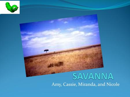 Amy, Cassie, Miranda, and Nicole. Location  Savannas cover half of Africa, most of Australia, India, and South America.  Savannas are affected by climate.
