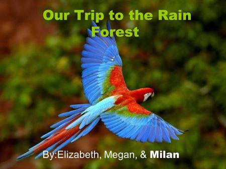 Our Trip to the Rain Forest By:Elizabeth, Megan, & Milan.