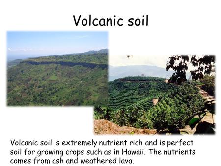 Volcanic soil is extremely nutrient rich and is perfect soil for growing crops such as in Hawaii. The nutrients comes from ash and weathered lava. Volcanic.
