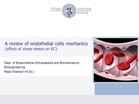 A review of endothelial cells mechanics (effect of shear stress on EC) Dept. of Experimental Orthopaedics and Biomechanics Bioengineering Reza Abedian.