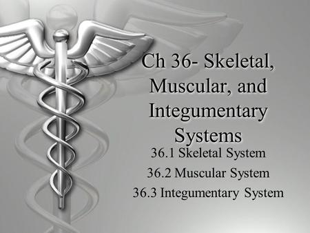 Ch 36- Skeletal, Muscular, and Integumentary Systems 36.1 Skeletal System 36.2 Muscular System 36.3 Integumentary System.