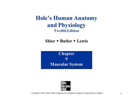 1 Hole's Human Anatomy and Physiology Twelfth Edition Shier  Butler  Lewis Chapter 9 Muscular System Copyright © The McGraw-Hill Companies, Inc. Permission.