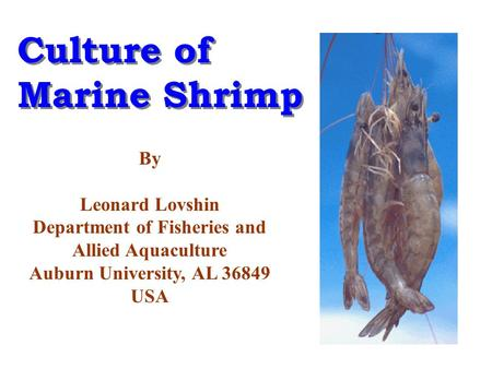 Culture of Marine Shrimp Culture of Marine Shrimp By Leonard Lovshin Department of Fisheries and Allied Aquaculture Auburn University, AL 36849 USA.