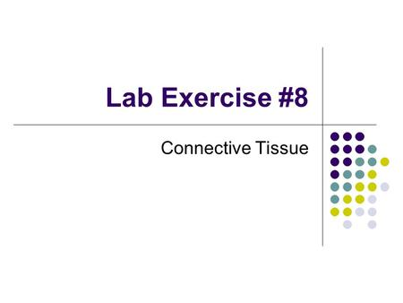 Lab Exercise #8 Connective Tissue. Characteristics of Connective Tissues Specialized cells Solid extracellular protein fibers Fluid extracellular ground.