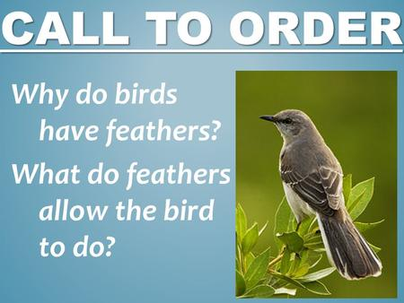 CALL TO ORDER Why do birds have feathers? What do feathers allow the bird to do?