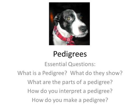 Pedigrees Essential Questions: What is a Pedigree? What do they show? What are the parts of a pedigree? How do you interpret a pedigree? How do you make.