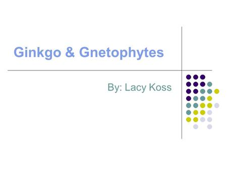 Ginkgo & Gnetophytes By: Lacy Koss.  Ginkgos ! Characteristics of a Ginkgo Ginkgo biloba is one of the oldest living tree species. One tree can live.