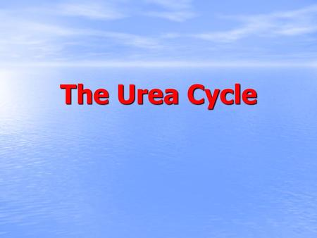 The Urea Cycle. TCA cycle HOW UREA CYCLE WORKS?