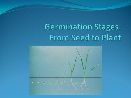 Factors That Affect Seed Germination 1. Water a. Water softens the seed. b. Overwatering can be dangerous to the seed. It can prevent oxygen from getting.