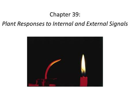 Chapter 39: Plant Responses to Internal and External Signals.
