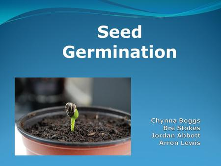 Seed Germination. Research Question Do seeds germinate faster if they are watered with fertilizer rather than water alone?