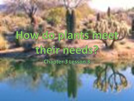 Plants Plants supply oxygen that most organisms need to stay alive They also supply food for many organisms.
