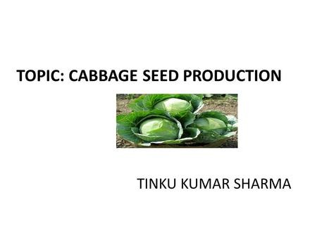 TOPIC: CABBAGE SEED PRODUCTION