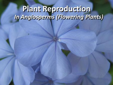 Plant Reproduction In Angiosperms (Flowering Plants)