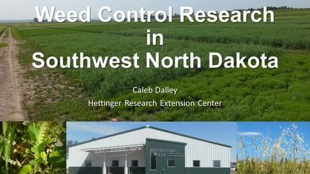 Weed Control Research in Southwest North Dakota Caleb Dalley Hettinger Research Extension Center.