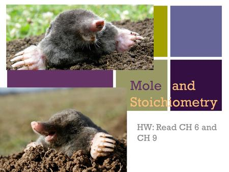 + Mole and Stoichiometry HW: Read CH 6 and CH 9. + Measuring Matter A mole is an amount of a substance Similar to: 12 in a dozen, 100 pennies in a dollar,