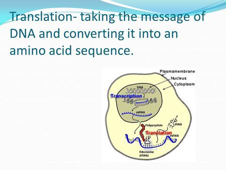 Translation- taking the message of DNA and converting it into an amino acid sequence.