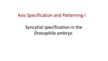 Axis Specification and Patterning I Syncytial specification in the Drosophila embryo.