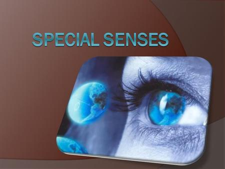 Five Senses (listed in book)  Hearing  Sight  Taste  Smell  Balance Maintenance  However, Touch is often known as the 5 th sense The special senses.