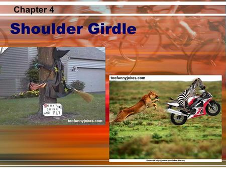 Chapter 4 Shoulder Girdle.