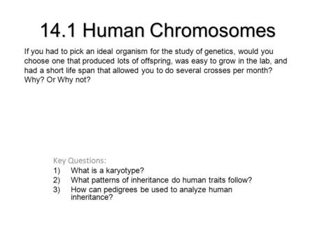 14.1 Human Chromosomes Key Questions: 1)What is a karyotype? 2)What patterns of inheritance do human traits follow? 3)How can pedigrees be used to analyze.