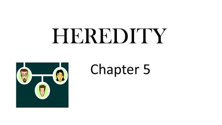 HEREDITY Chapter 5. Heredity- The passing of traits from parent to offspring Genes on chromosomes control the traits that show up in an organism The different.