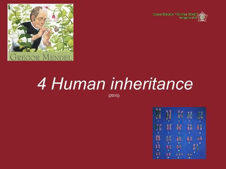 4 Human inheritance (2015). Human inheritance In this lesson we will describe the inheritance of traits due to dominant and recessive genes, located on.