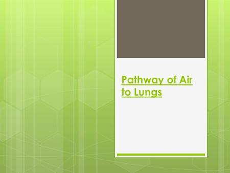 Pathway of Air to Lungs. Nose Air goes into the body through the mouth or nose and down the pharynx, or throat.