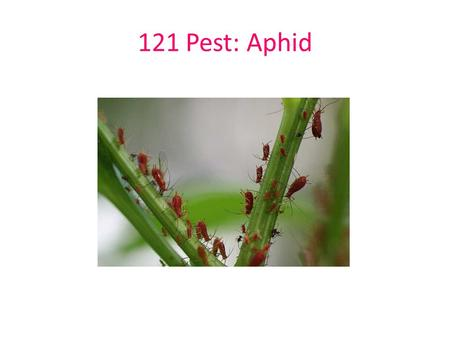 121 Pest: Aphid. 122 Pest: Bagworm 123 Pest: Scale.