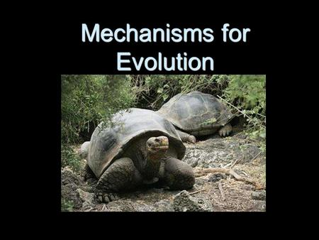 Mechanisms for Evolution. Differing Viewpoints… Jean-Baptiste Lamarck Jean-Baptiste Lamarck Evolution occurs through the use and disuse of physical featuresEvolution.