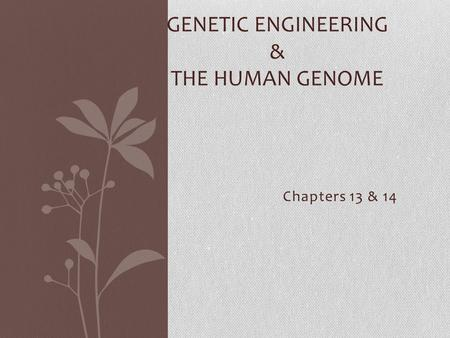 Chapters 13 & 14 GENETIC ENGINEERING & THE HUMAN GENOME.
