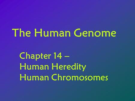 The Human Genome Chapter 14 – Human Heredity Human Chromosomes.
