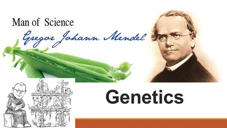 "Genetics Genetics: what is it? What is the study of genetics? ◦""Genetics is the study of heredity, the process in which a parent passes certain genes."