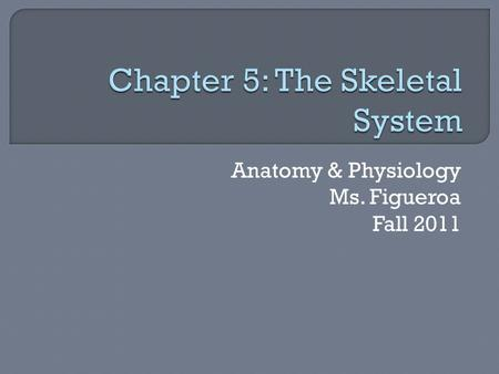 Anatomy & Physiology Ms. Figueroa Fall 2011.  Objectives: 1. Name 5 functions of the skeletal system 2. Describe the anatomy of a long bone 3. Describe.