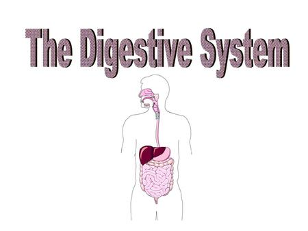 DIGESTION The process of changing complex solid foods into simpler soluble forms which can be absorbed by body cells.