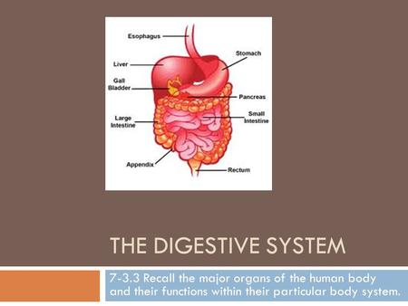 THE DIGESTIVE SYSTEM 7-3.3 Recall the major organs of the human body and their functions within their particular body system.