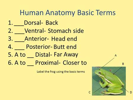 Human Anatomy Basic Terms 1.___Dorsal- 2. ___Ventral- 3. ___Anterior- 4. ___ Posterior- 5. A to __ Distal- 6. A to __ Proximal- Label the frog using the.