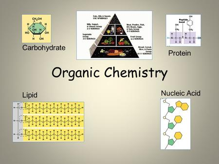 Organic Chemistry Carbohydrate Protein Lipid Nucleic Acid.