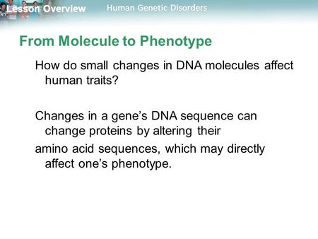 Lesson Overview Lesson Overview Human Genetic Disorders From Molecule to Phenotype How do small changes in DNA molecules affect human traits? Changes in.