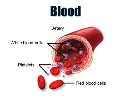 Blood White blood cells Platelets Red blood cells Artery.