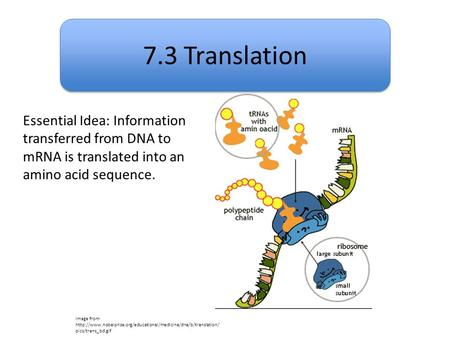 7.3 Translation Image from  pics/trans_bd.gif Essential Idea: Information transferred.